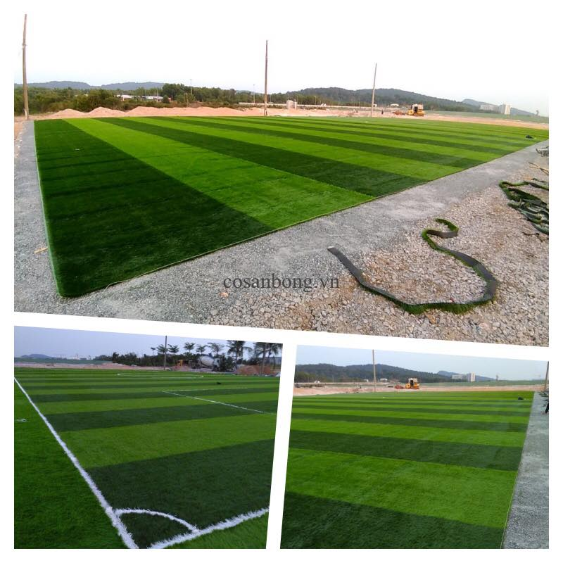 San bong CEO Phu Quoc  _xffkL → Công ty AFD grass