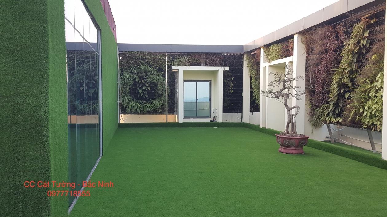 Co nhan tao chung cu Cat Tuong _00000 → Công ty AFD grass