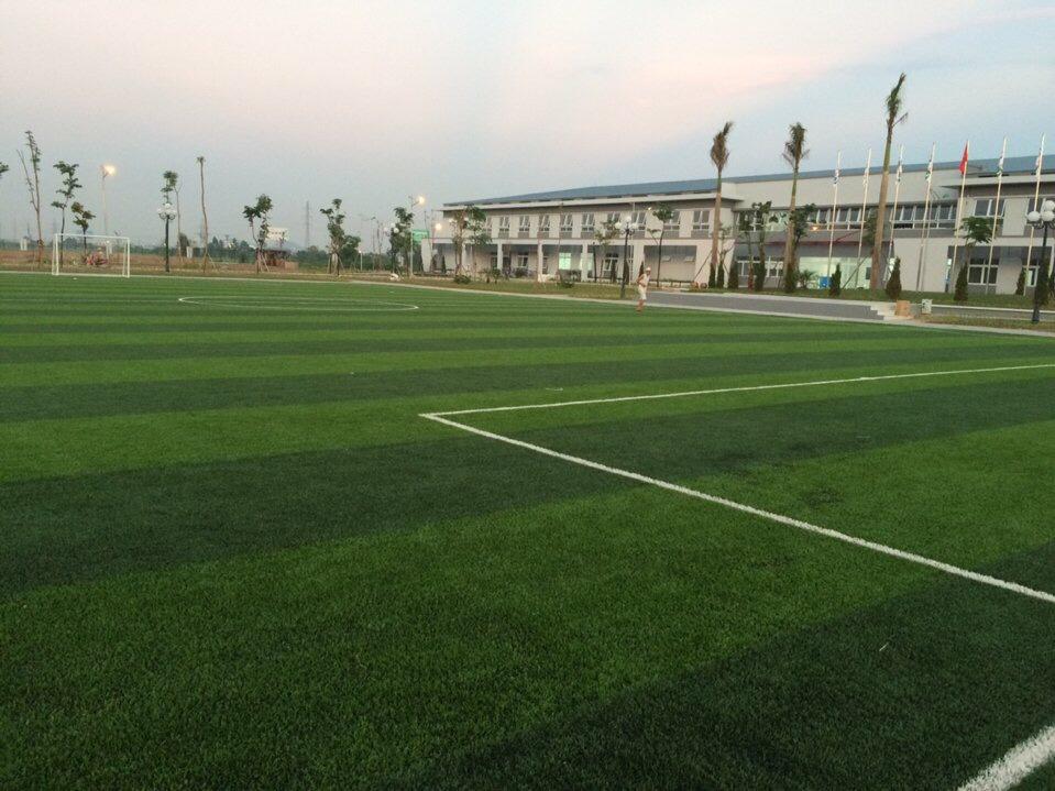 SaN BoNG da CEO TRuoNG CAO daNG daI VIeT _6PBTt → Công ty AFD grass