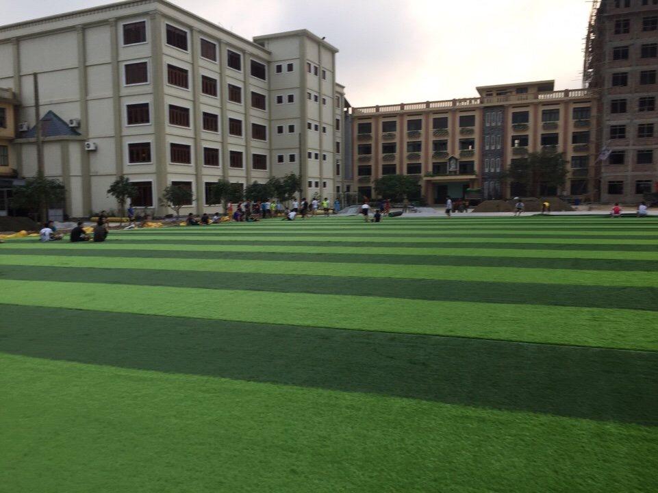 SaN BoNG TGM THANH HOa  _PcjvY → Công ty AFD grass