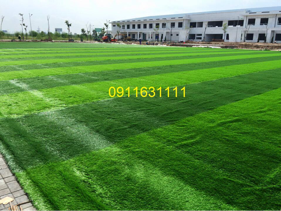 San bong da co nhan tao truong cao dang dai Viet _0U9NP → Công ty AFD grass