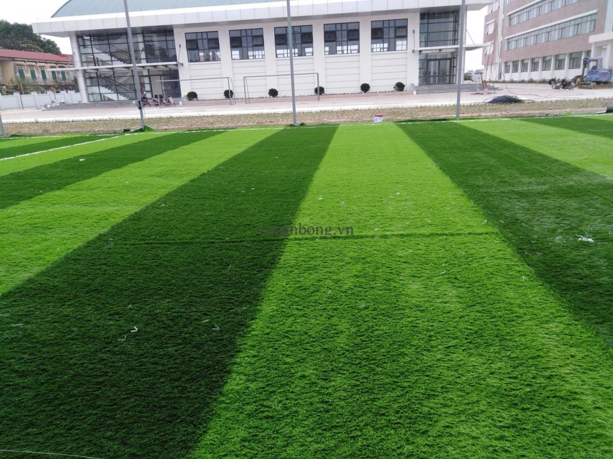 SaN BoNG TRuoNG THCS DuC Tu, doNG ANH _E8C0l → Công ty AFD grass